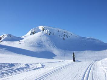 Bild Langlauf in Norwegen