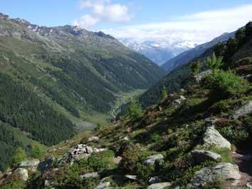 Bild Waldgrenze